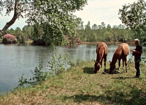 Gast vom Reiterhof Severloh lässt seine Pferde am Badesee grasen