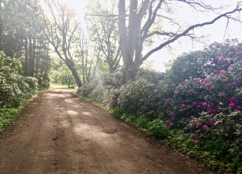 Die Sonne scheint auf den Reitweg mit blühenden Rododendren auf dem Reiterhof Severloh