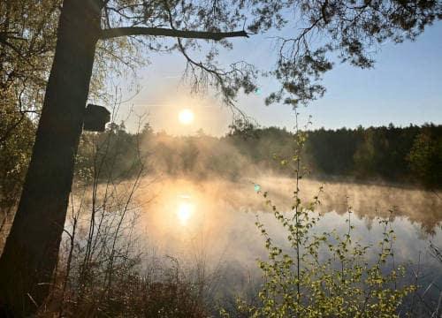 Mystischer Blick auf den Seerosenteich kurz nach Sonnenaufgang auf dem Reiterhof Severloh