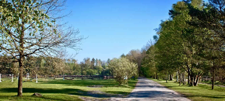 Blick über den Springplatz und Zufahrtsweg zum Reiterhof Severloh
