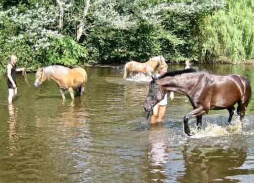Gäste baden mit Pferd im Pferdeteich vom Reiterhof Severloh