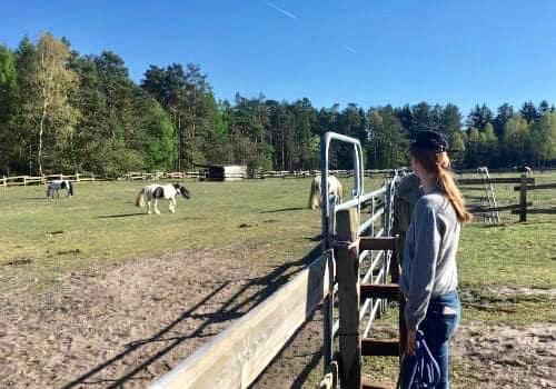 Reiterin schaut über die Weide zu den Pferden vom Reiterhof Severloh