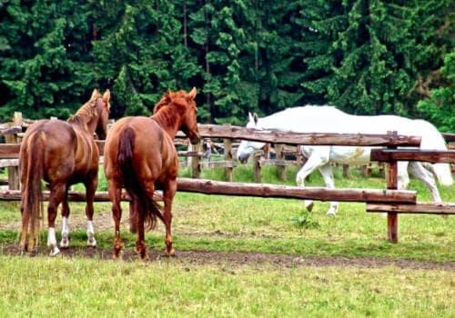 Pferde am Zaun auf den Weiden vom Reiterhof Severloh