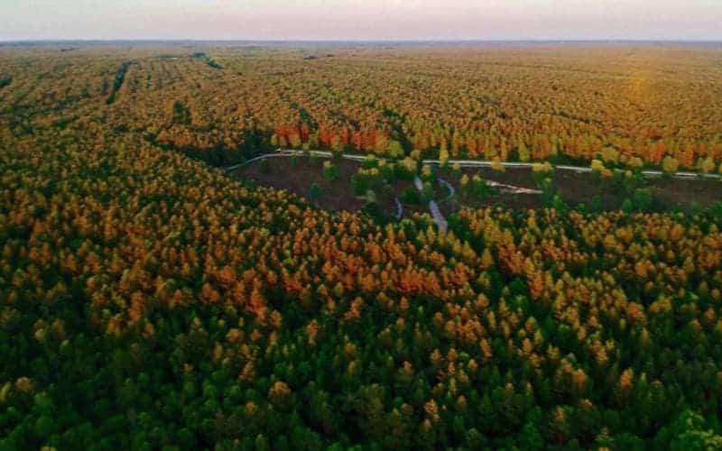 Luftaufnahme über den Wald mit der Heidefläche vom Reiterhof Severloh
