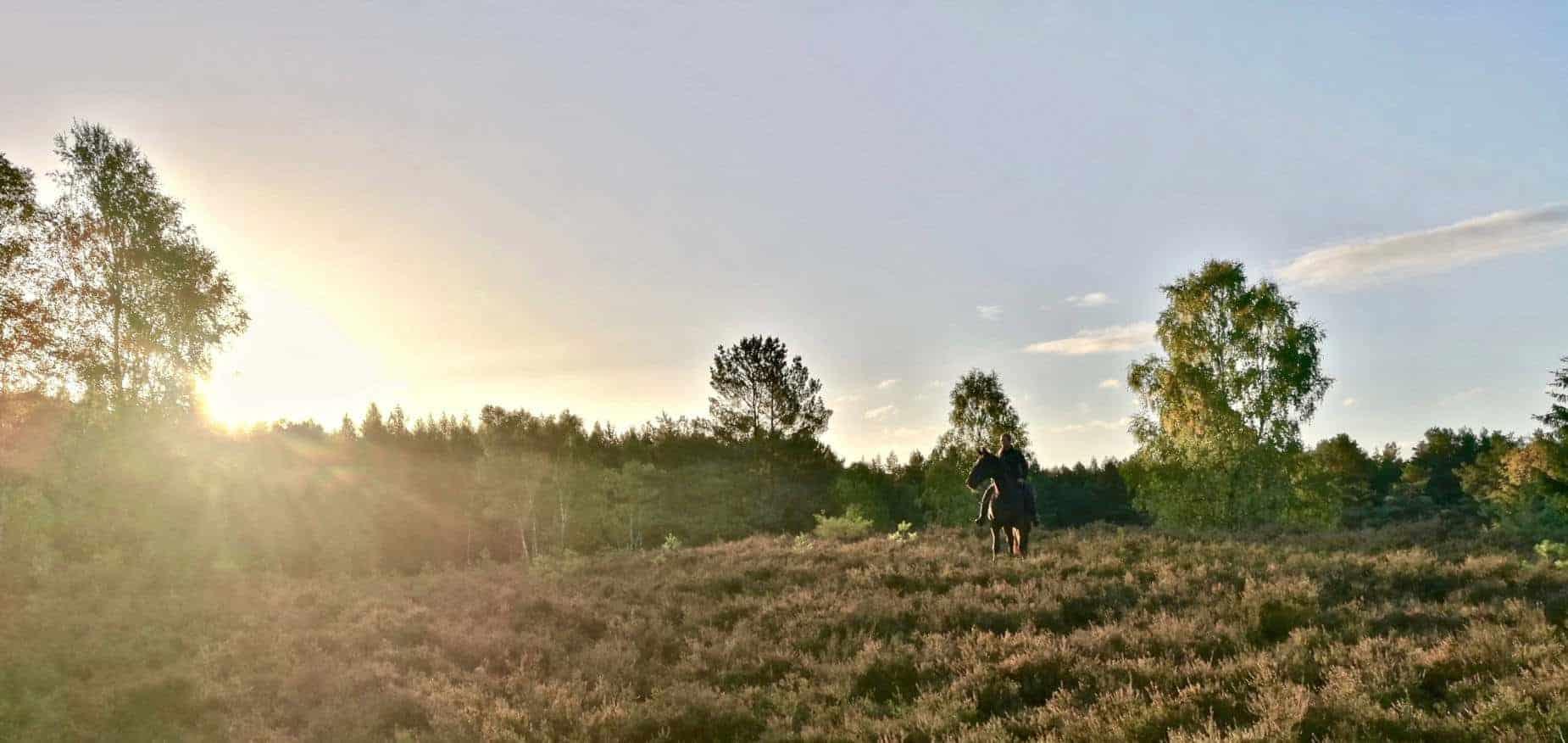 Heidefläche vom Reiterhof Severloh bei Sonnenuntergang mit Reiter und Pferd