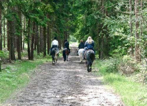 Reiter und Pferd auf den Reitwegen vom Ferienhof Severloh