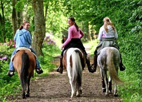 Ausritt auf den Reitwegen von drei Reiterinnen auf dem Pferd im Gelände von Hof Severloh