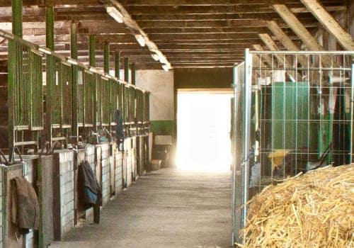 Blick auf die Stallgasse im oberen Stall auf dem Reiterhof Severloh