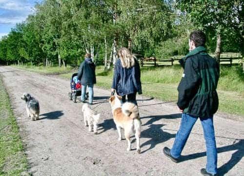 Spaziegang einer Familie im Reiturlaub auf dem Hauptweg vom Reiterhof Severloh