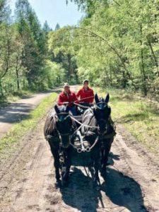 Ausfahrt im Urlaub mit Kutsche auf den Reitwegen von Hof Severloh