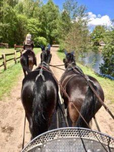 Ein Zweier-Kutschen-Gespann auf dem Reitweg am See vom Reiterhof Severloh