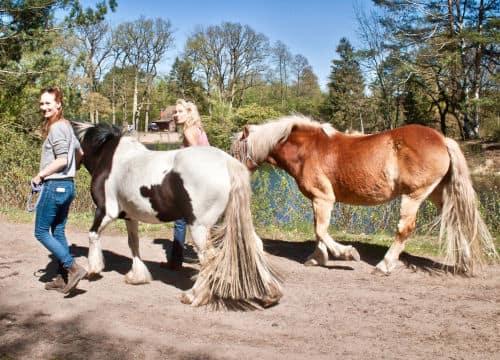 Erwachsene Frauen wollen reiten und führen die Leihpferde vom Reiterhof Severloh zum Stall