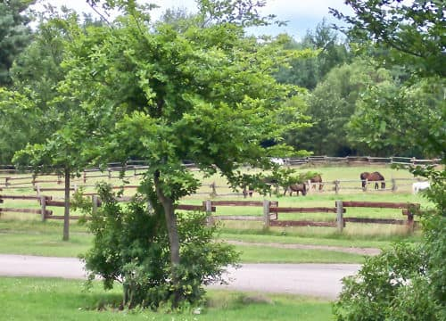 Blick auf die grasenden Pferde auf den Weiden vom Reiterhof Severloh