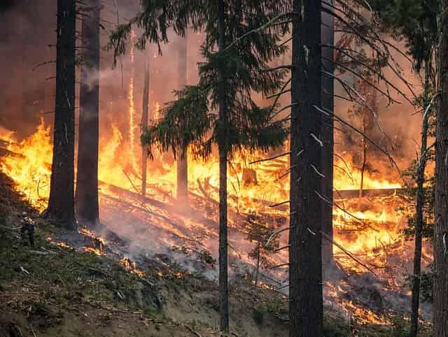 Der Wald brennt 1975 in der Südheide